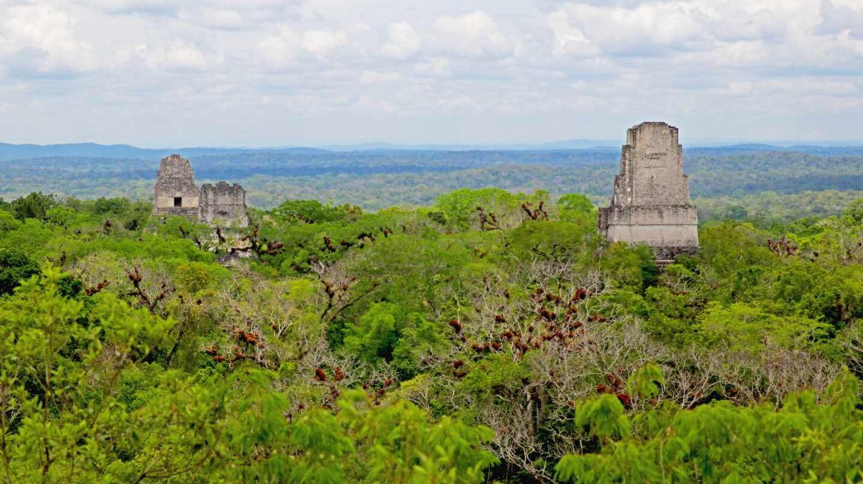 Parque Nacional de Tikal en la selva de Petén