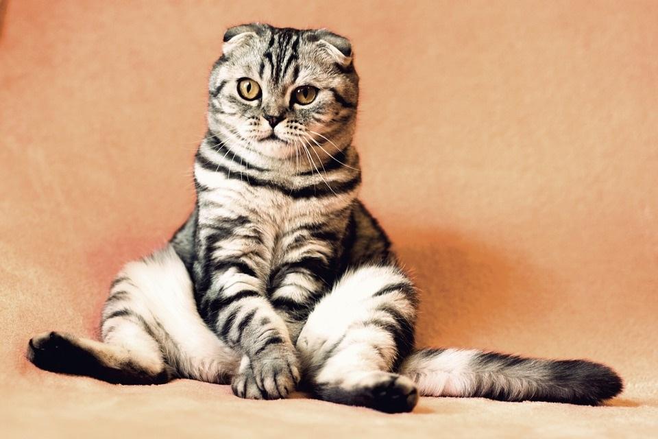 Día gato