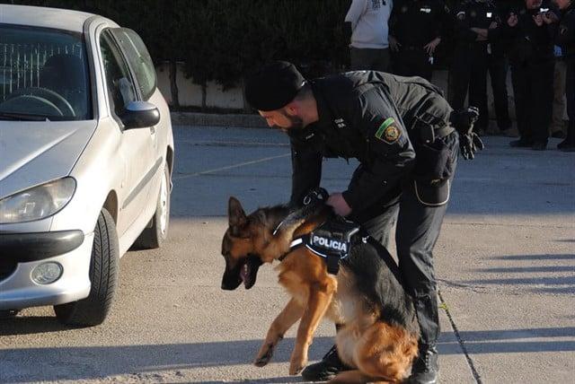 Imagen de archivo de una unidad canina