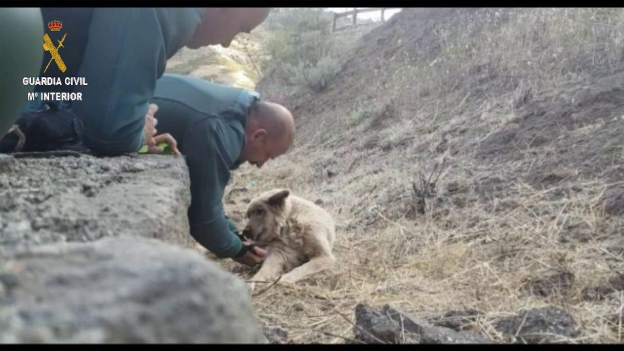 La Guardia Civil rescata a un perro exhausto en el incendio de Gran Canaria