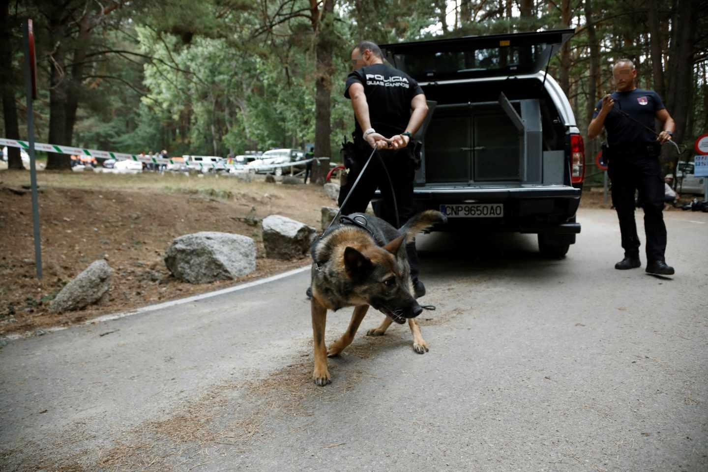 Un perro rastreador durante el operativo de búsqueda de Fernández Ochoa.