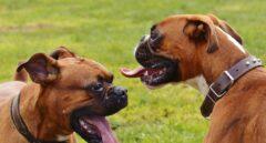 Deberes y derechos de las mascotas