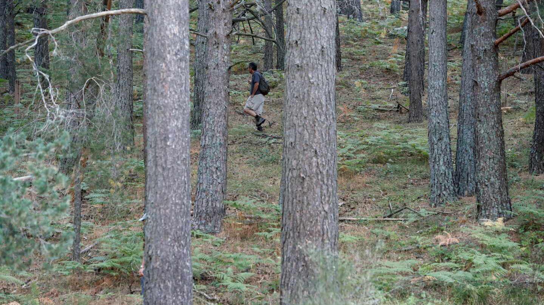 Investigadores y voluntarios rastrean la sierra de Madrid en búsqueda de la exesquiadora Blanca Fernández Ochoa.