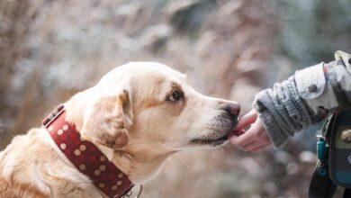 ¿Conocemos las responsabilidades que conlleva tener una mascota?