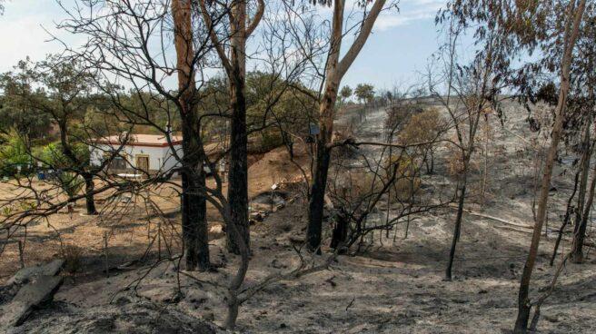 Paraje quemado en el incendio de El Ronquillo (Sevilla).