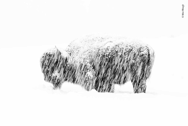 Exposición a la nieve por Max Waugh, EE.UU. Ganador 2019, blanco y negro