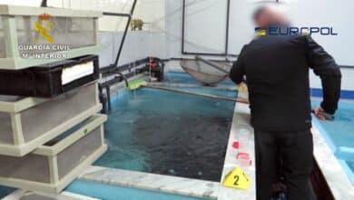 Los 400 kilos de angulas que 'viajan' en taxi