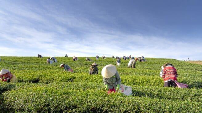 Mujeres agrícolas