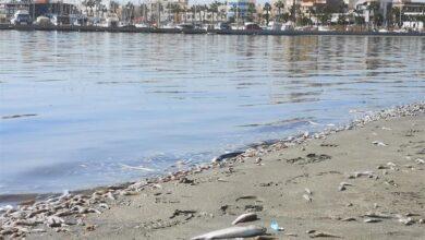 La flora y la fauna del Mar Menor habría muerto en el 80% de las aguas tras la DANA