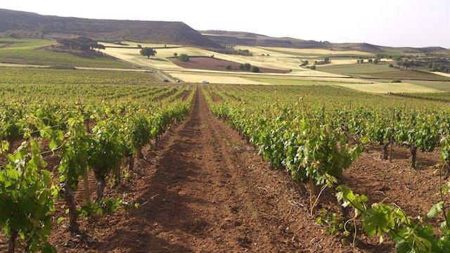 Ribera del Duero, región recomendada para visitar según 'The Washington Post'