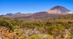 ¿Por qué debería un emprendedor plantearse abrir su negocio en Canarias?