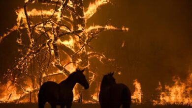 Australia, 130 incendios después