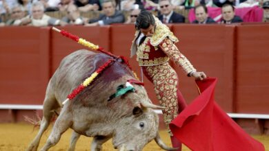 PACMA exige a Podemos que realice un referéndum sobre la tauromaquia