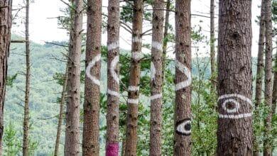 El 'Bosque de Oma' se muere