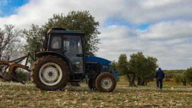 El viaje de la aceituna: así llega del olivo a tu mesa