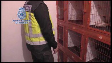La Policía 'revienta' una pelea de gallos con 200 asistentes en El Puerto de Santa María