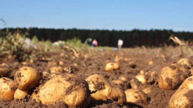 El abismo entre el campo y el súper: el precio de cada patata se multiplica por siete