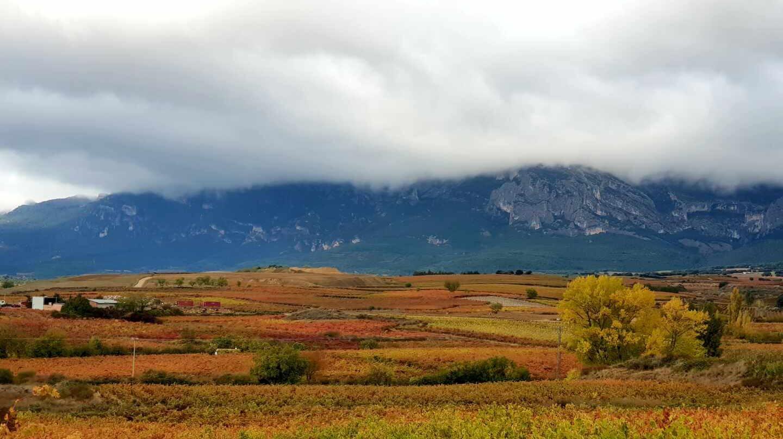El tinto más caro no es un Rioja... y otras curiosidades del vino español