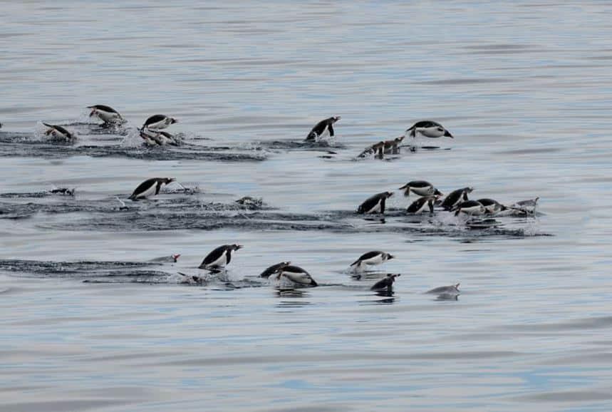 Las especies marinas se desplazan hacia los polos a medida que se calienta el océano