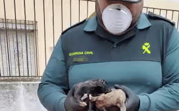 Rescatan con vida dos cachorros arrojados en un saco a un contenedor