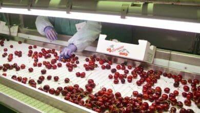 La cosecha de fruta, en peligro si el Gobierno no permite la movilidad en el campo