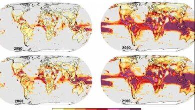 El cambio climático puede desatar pérdidas catastróficas de biodiversidad
