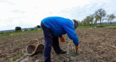 Los parados podrán compatibilizar el subsidio con el sueldo que cobren por trabajar en el campo
