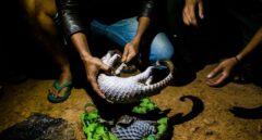 El tráfico de especies exóticas y su riesgo epidemiológico no cesa, pese al Covid-19
