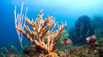 Algunos de los arrecifes de coral del Mediterráneo empezaron a formarse hace 400.000 años
