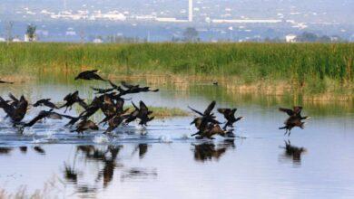 El Gobierno saca a consulta pública el Plan para la Protección del Delta del Ebro