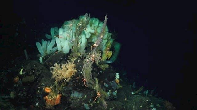 El océano profundo tampoco es inmune al cambio climático