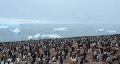 Los pingüinos rey producen ingentes cantidades de gas de la risa