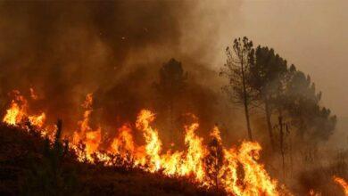 Un verano proclive a la aparición de grandes incendios, debido al parón por la Covid-19 y las lluvias