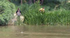¿Qué hace un cocodrilo del Nilo en el Duero?