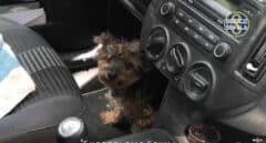 Denunciada por encerrar a su perro en el coche durante horas y a 40 grados