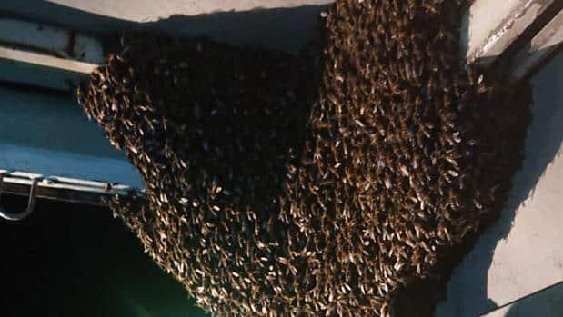 La Guardia Civil y un apicultor retiran un enjambre en un camión averiado