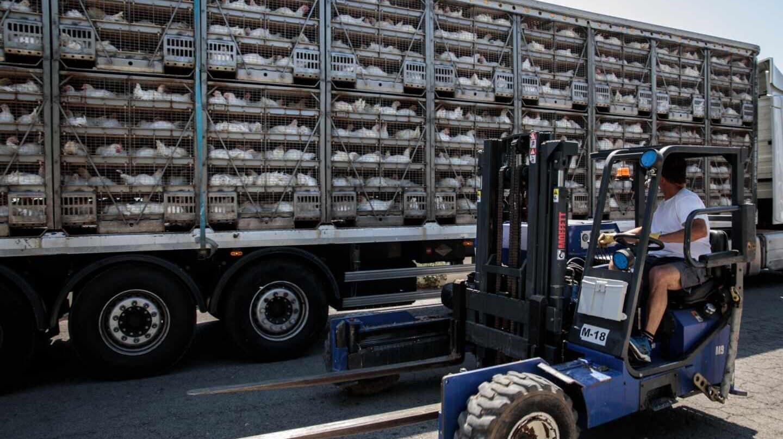 Un camión accede a la planta cárnica de Rafelbunyol.