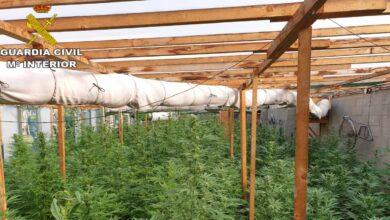 Dos detenidos con 5 toneladas de marihuana encubiertas en cultivo de cáñamo
