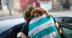Hotel, maleta y transportín: cómo planificar tu próximo viaje con el perro