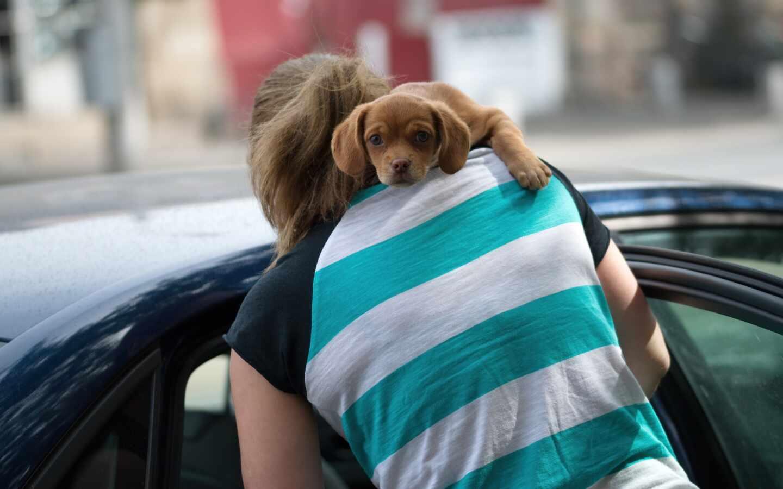 Un perro con su dueña.