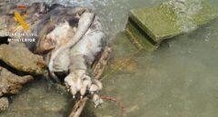 Investigado en Granada por ahogar a su perro en el pantano de los Bermejales