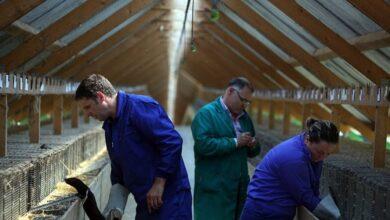 Visones con coronavirus: ¿Son peligrosas las 38 granjas que hay en España?