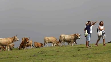 De Asturias a Valencia: Las CCAA que 'mejor' han gestionado el Covid en verano