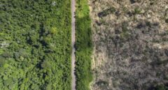 Saltan las alarmas: el Amazonas arde más que en 2019