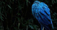 ¿Por qué azul y verde son los colores más brillantes de la naturaleza?