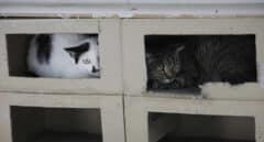 Desahucian a un hombre que vivía con 96 gatos en un piso en Valencia