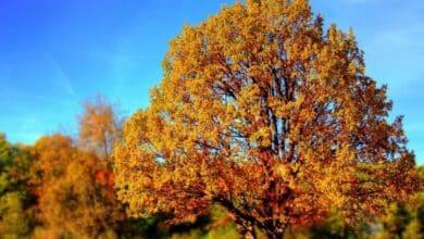 Conoce la previsión meteorológica para el próximo otoño