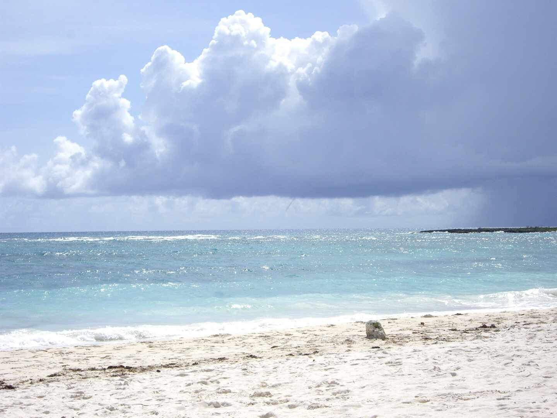 playa-algas-mexico-1440x1080