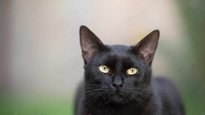 gato-negro-coronavirus-1920x1281.jpg