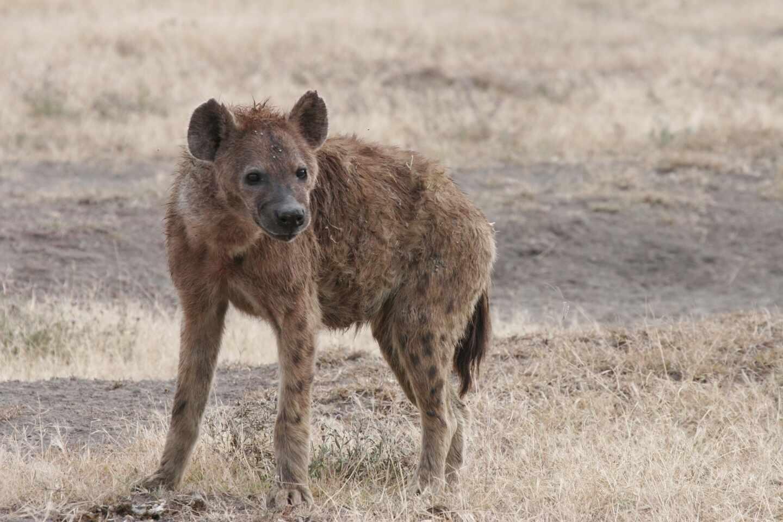 hiena-restos-yacimiento-1920x1280.jpg